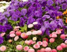 Từ vựng tiếng Anh chủ đề các loài hoa_p1