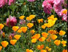 Từ vựng tiếng Anh chủ đề các loài hoa_p2