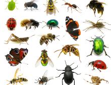 Từ vựng tiếng Anh  các loài côn trùng