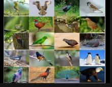 Hình ảnh tiếng Anh  chủ đề các loài chim cho trẻ_p1