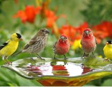 Hình ảnh tiếng Anh chủ đề các loài chim cho trẻ_p2
