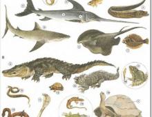 Hình ảnh tiếng Anh chủ đề các loài cá cho bé_p2