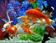 Hình ảnh tiếng Anh chủ đề các loài cá cho bé_p1